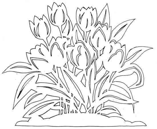 тюльпаны цветы_4